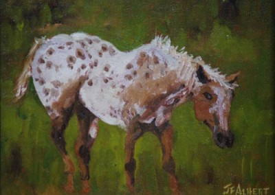 Appaloosa by Jerry F Albert