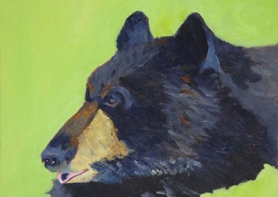 Black Bear study by Jerry F Albert
