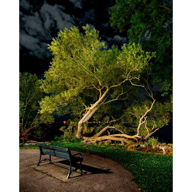 Trees in Flash by Ian Davis