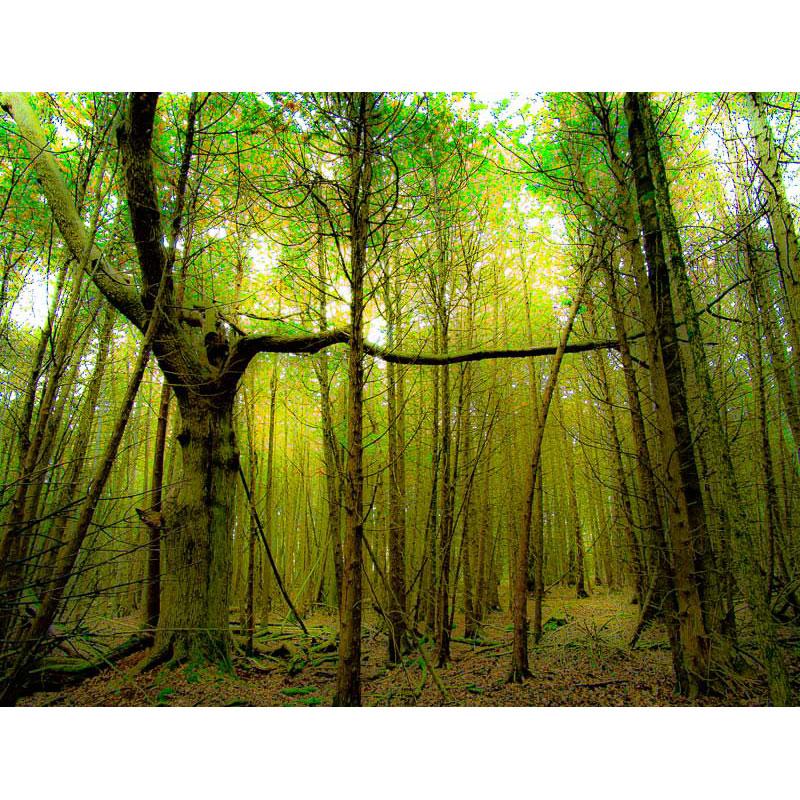 Trees on Acid by Ian Davis