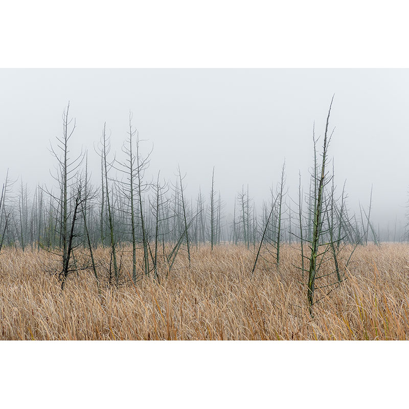 Marsh by Dave Nodwell