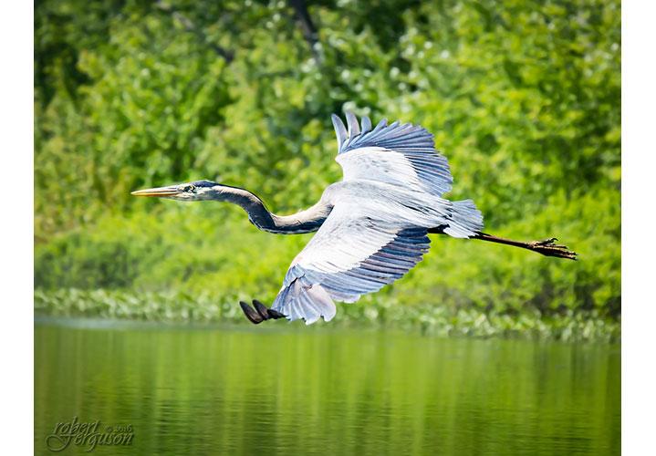 On Upturned Wings by Robert Ferguson