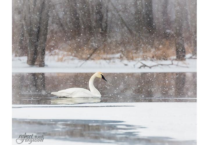 Snowy Light by Robert Ferguson