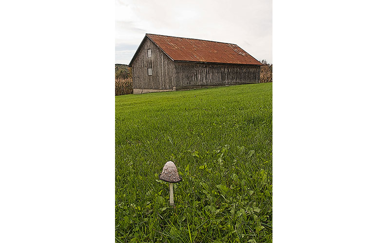 Barn & Mushroom by Tom Groot