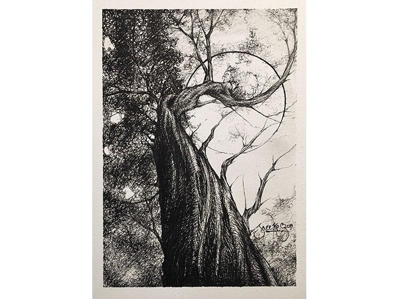 Tree Majesty by Jeffrey Weekes