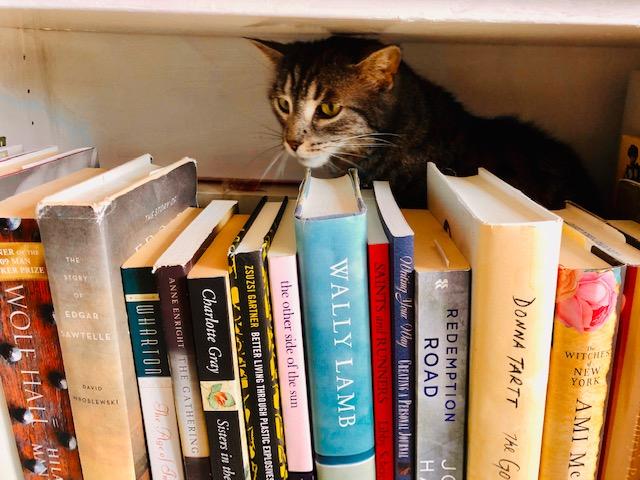 The Literary Cat - image by Reva